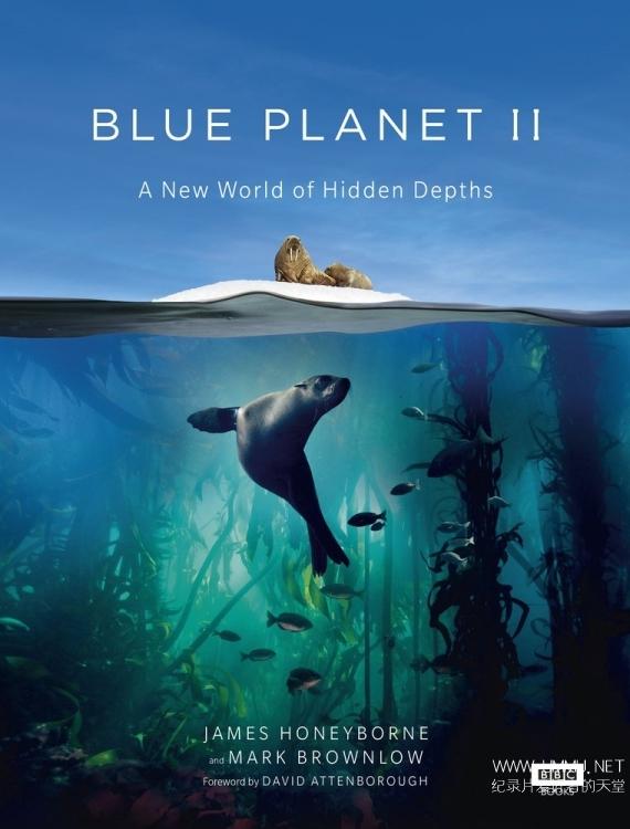 BBC纪录片《蓝色星球 II 第1集:汪洋大海 Blue Planet II:One Ocean 2017》第二季第1集 英语中字 1080P/MP4/3.89GB 蓝色星球插图