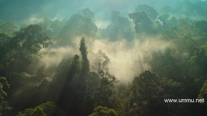 Netflix纪录片《我们的星球 Our Planet 2019》全8集 英语中字 1080P/MKV/20.7G 地球脉动创剧人员打造插图(1)