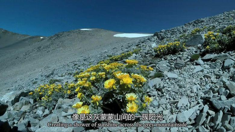 BBC纪录片《新西兰:神话之岛 New Zealand: Earth's Mythical Islands》全3集 英语中英双字 1080P/MP4/4.42G 新西兰纪录片下载插图(7)