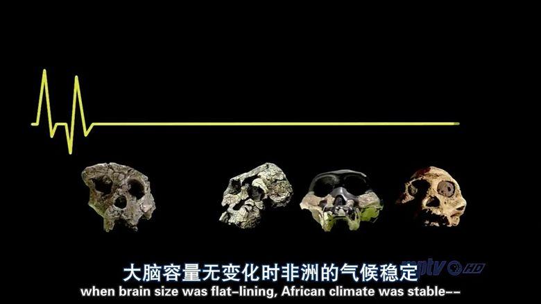 PBS纪录片《人类进化 Becoming Human》全3集 英语中英双字 高清/MP4/1.11G 人类探索纪录片下载插图(6)