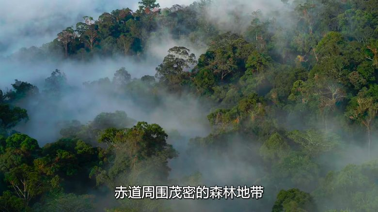 Netflix纪录片《大卫·爱登堡:地球上的一段生命旅程 David Attenborough: A Life on Our Planet 2020》英语中字 1080P/MKV/3.56G 自然界破坏性变化插图(3)