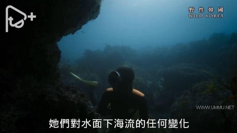 PTS纪录片《野性韩国 Wild Korea 2019》全2集 国语中字 1080P/AVI/6.38G 南韩自然生态与人文插图(4)