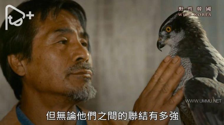 PTS纪录片《野性韩国 Wild Korea 2019》全2集 国语中字 1080P/AVI/6.38G 南韩自然生态与人文插图(2)