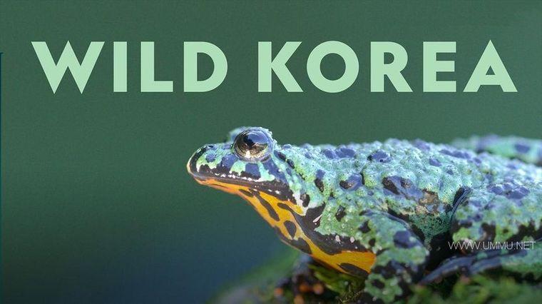 PTS纪录片《野性韩国 Wild Korea 2019》全2集 国语中字 1080P/AVI/6.38G 南韩自然生态与人文插图