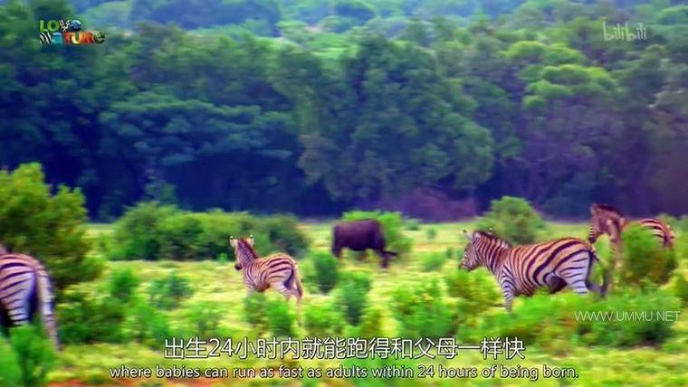 BBC纪录片《动物宝宝 Animal Babies 2016》全13集 英语中英双字 720P/MP4/854M 野生动物幼崽们插图(2)