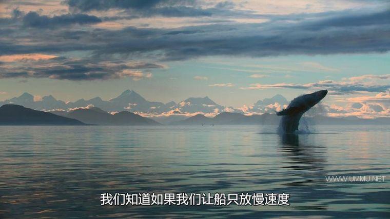 AppleTV纪录片《地球改变之年 The Year Earth Changed 2021》英语中字 1080P/MKV/3.56G 人类和野生动物和谐共处插图(6)