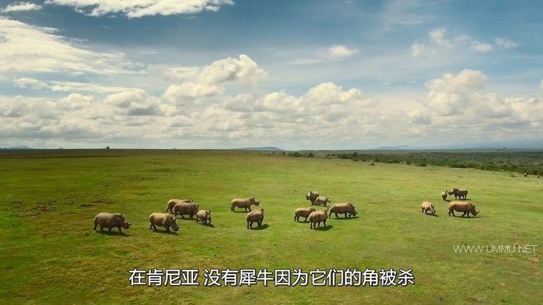 AppleTV纪录片《地球改变之年 The Year Earth Changed 2021》英语中字 1080P/MKV/3.56G 人类和野生动物和谐共处插图(5)