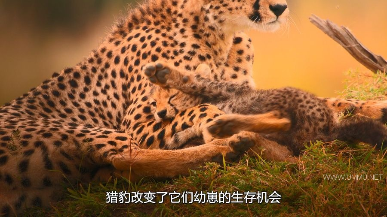 AppleTV纪录片《地球改变之年 The Year Earth Changed 2021》英语中字 1080P/MKV/3.56G 人类和野生动物和谐共处插图(4)