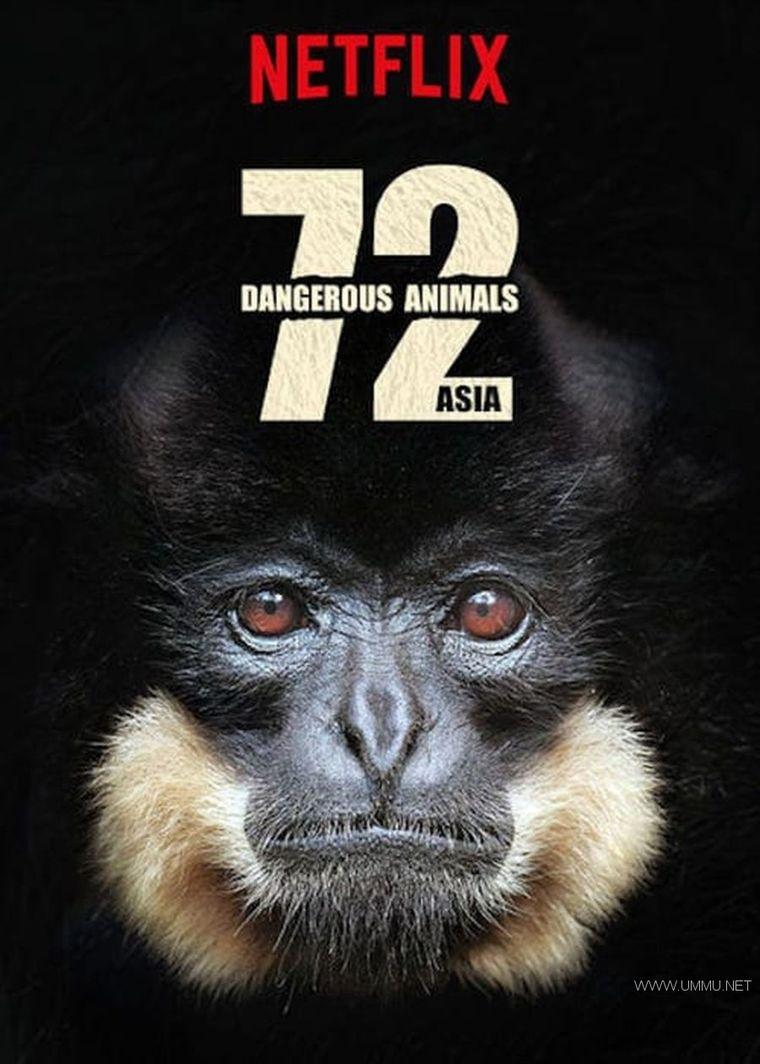 Netflix纪录片《72 大危险动物:亚洲篇 72 Dangerous Animals: Asia 2018》全12集 官方原版英语中字 1080P/MP4/28.3G 动物纪录片</BR><span>年费会员专享</span>插图