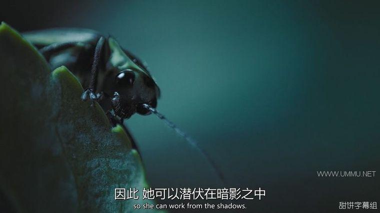 BBC纪录片《捕猎皇后 Fierce Queens 2020》全7集 英语中英双字 1080P/MP4/805M 动物的捕猎生活插图(6)