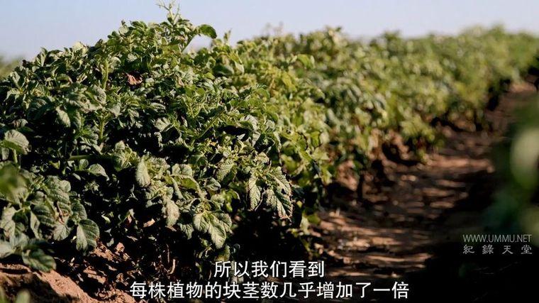 Netflix纪录片《可持续食物 Sustainable 2016》英语中字 720P/MP4/1.54G 环保农业的探索插图(7)