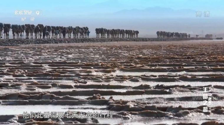 央视纪录片《生命之盐 Behind Salt》全6集 国语中字 1080P/MP4/7.17G 盐的历史插图(2)