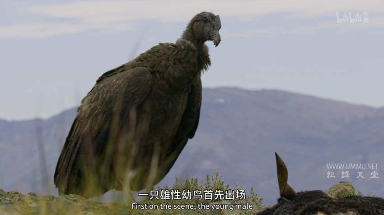 BBC纪录片《伊甸园 最后的秘境 Eden: Untamed Planet 2021》全6集 英语中英双字 4K高清/MP4/31.3G 人类未踏足土地的奥秘</BR><span>年费会员专享</span>插图(4)