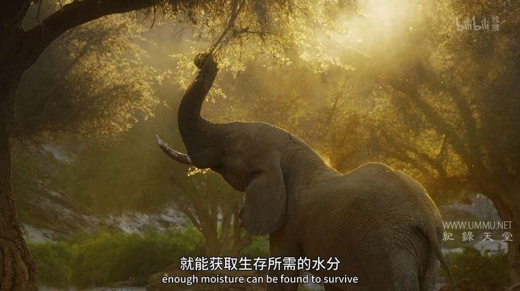 BBC纪录片《伊甸园 最后的秘境 Eden: Untamed Planet 2021》全6集 英语中英双字 4K高清/MP4/31.3G 人类未踏足土地的奥秘</BR><span>年费会员专享</span>插图(1)